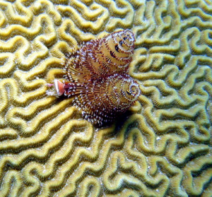 health benefits of coral calcium